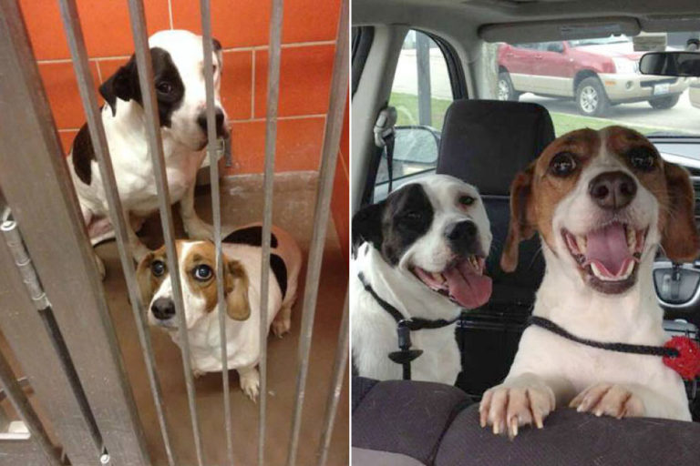 Adorable Photos of Shelter Dogs the Moment They Get Adopted