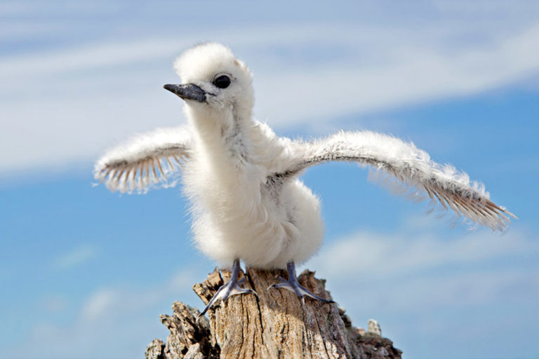 From Fluffy to Flying: 25+ Photos of Baby Birds Vs All Grown Up