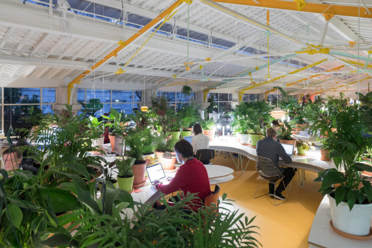 Bringing the Great Outdoors Into the Workplace: The Office Space With Over 1,000 Plants