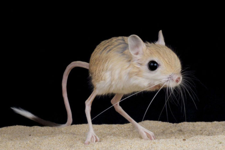 Real Life Animals That Are So Bizarre They Actually Look Make Believe