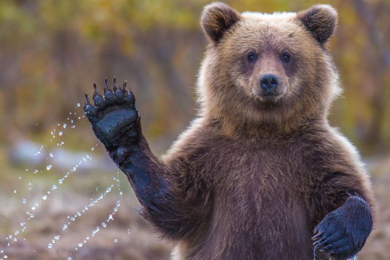 30+ Adorable Animals Who Were Unexpectedly Caught Waving at the Camera
