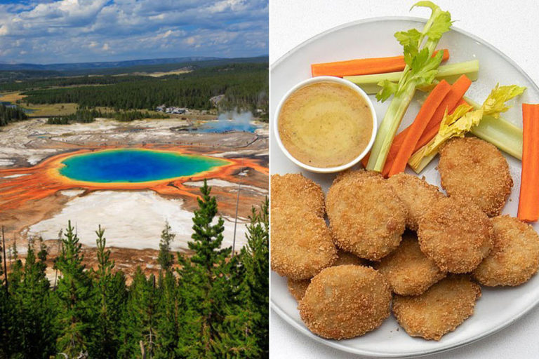 How Volcanic Fungi From Yellowstone National Park Could Be the Answer to the Vegan Protein Problem