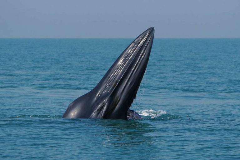 Take a Look at the New American Whale Species That's Been Discovered in the Gulf of Mexico