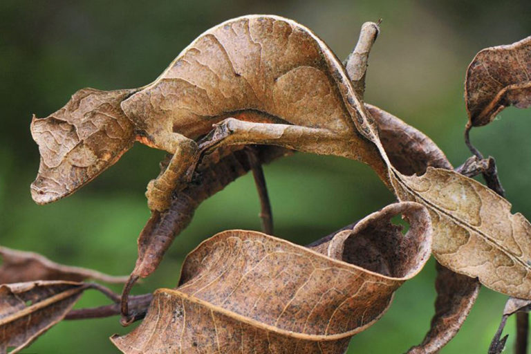 Can You Spot What's Camouflaged? Take a Look at the Best Photos of Animals Playing Hide and Seek